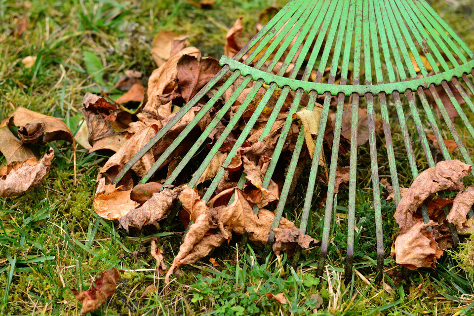 Youth: Raking Leaves for Senior Citizens